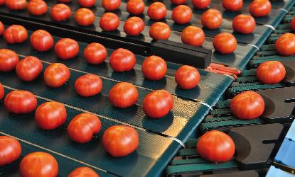 光センサー付選果機で高品質をお約束。|スーパーフルーツトマト NKKアグリドリーム